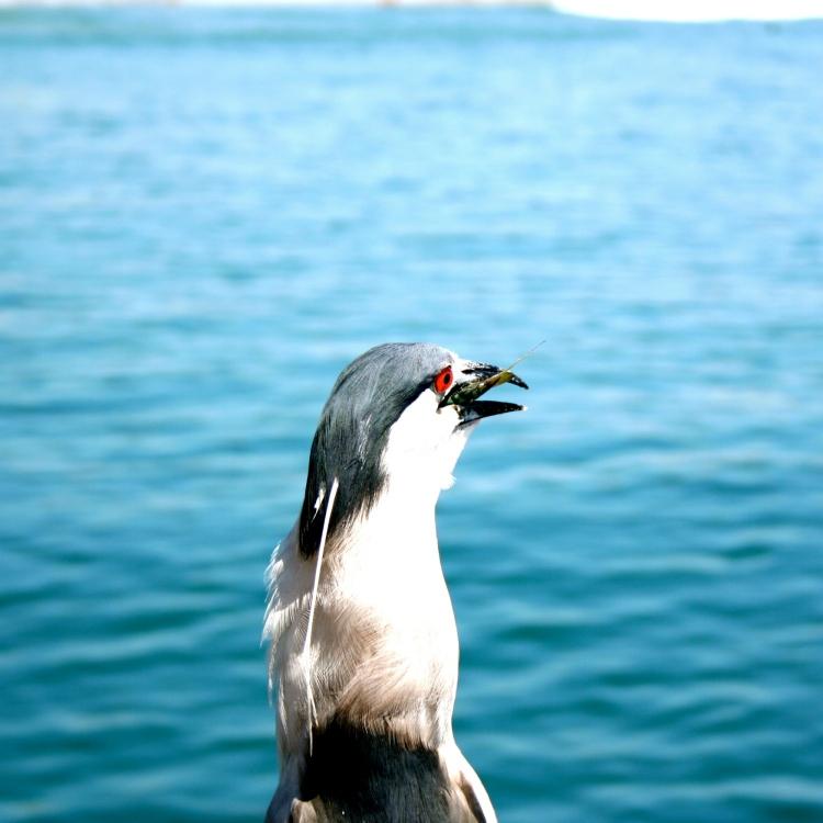 Venice Beach, bird