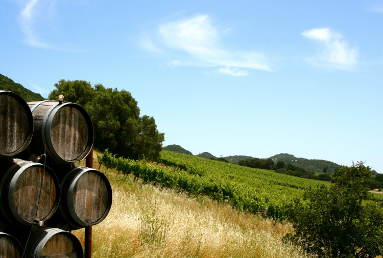 Sonoma Valley Travel Guide